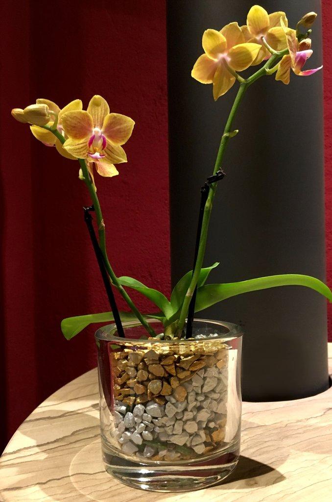 glastopf s rund f r mini orchideen colomi orchideen substrat aktiver aquariumboden borniak. Black Bedroom Furniture Sets. Home Design Ideas